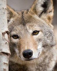 Love Wolfs Looks Like She Needs A Friend